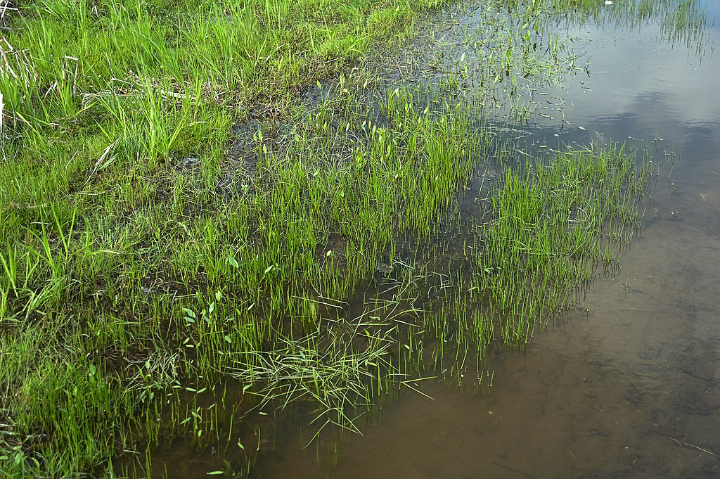 standing water in yard after rain