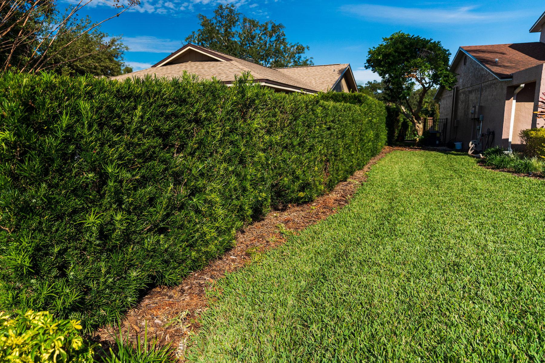 lawn shrub