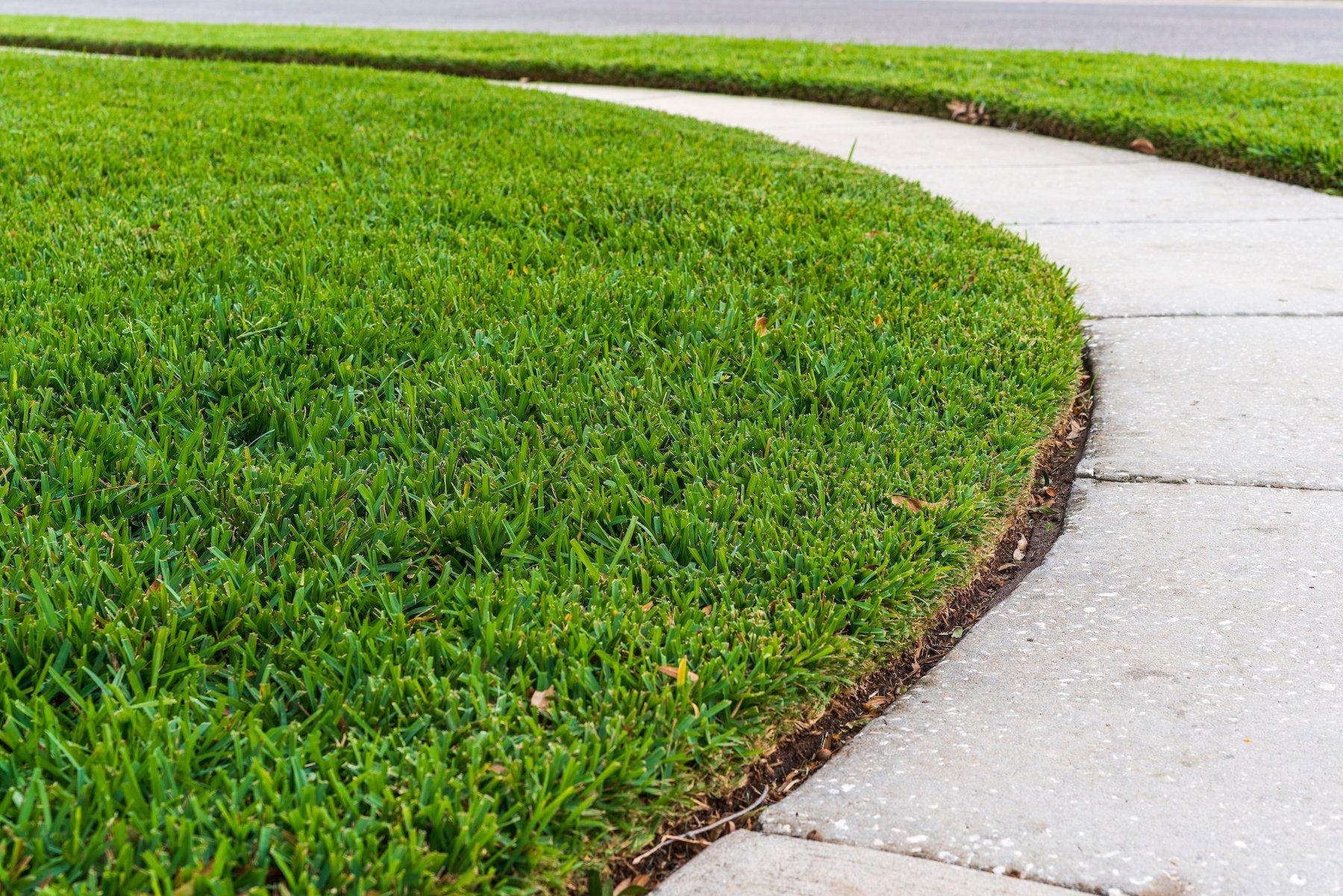 sod along a sidewalk
