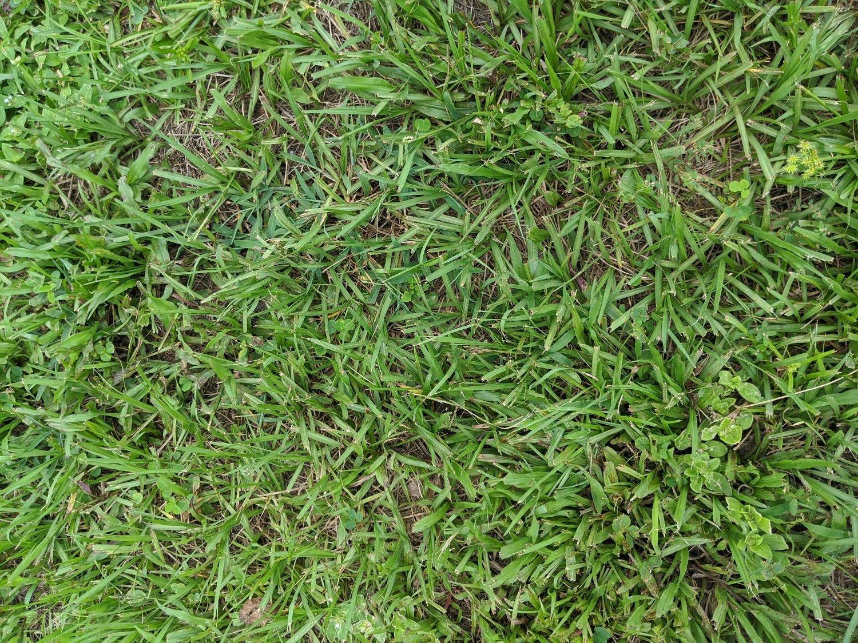 bahia grass sod in lawn in Orlando
