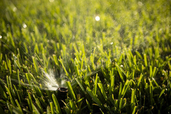 sprinkler head in grass