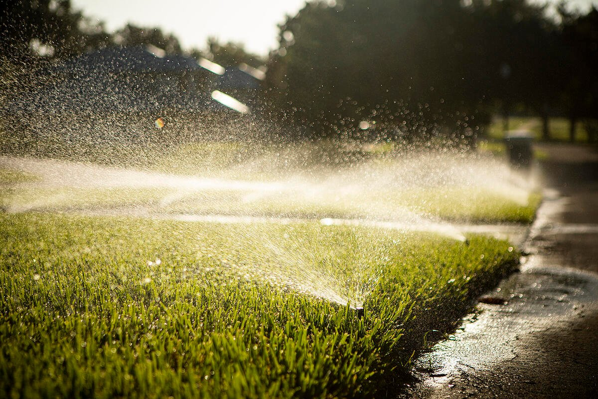 sprinklers watering new St. Augustine sod