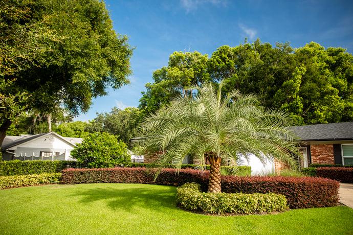 Florida front yard landscape plantings