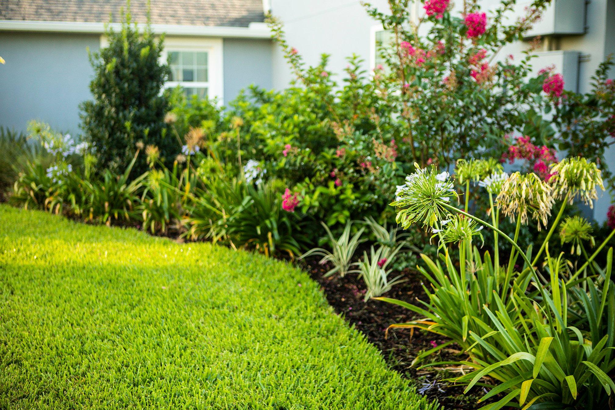 Florida lawn plantings