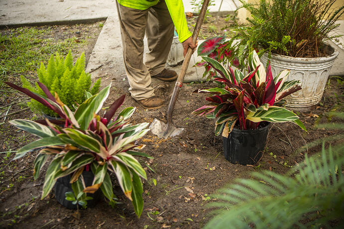 professional plant installation with proper placement