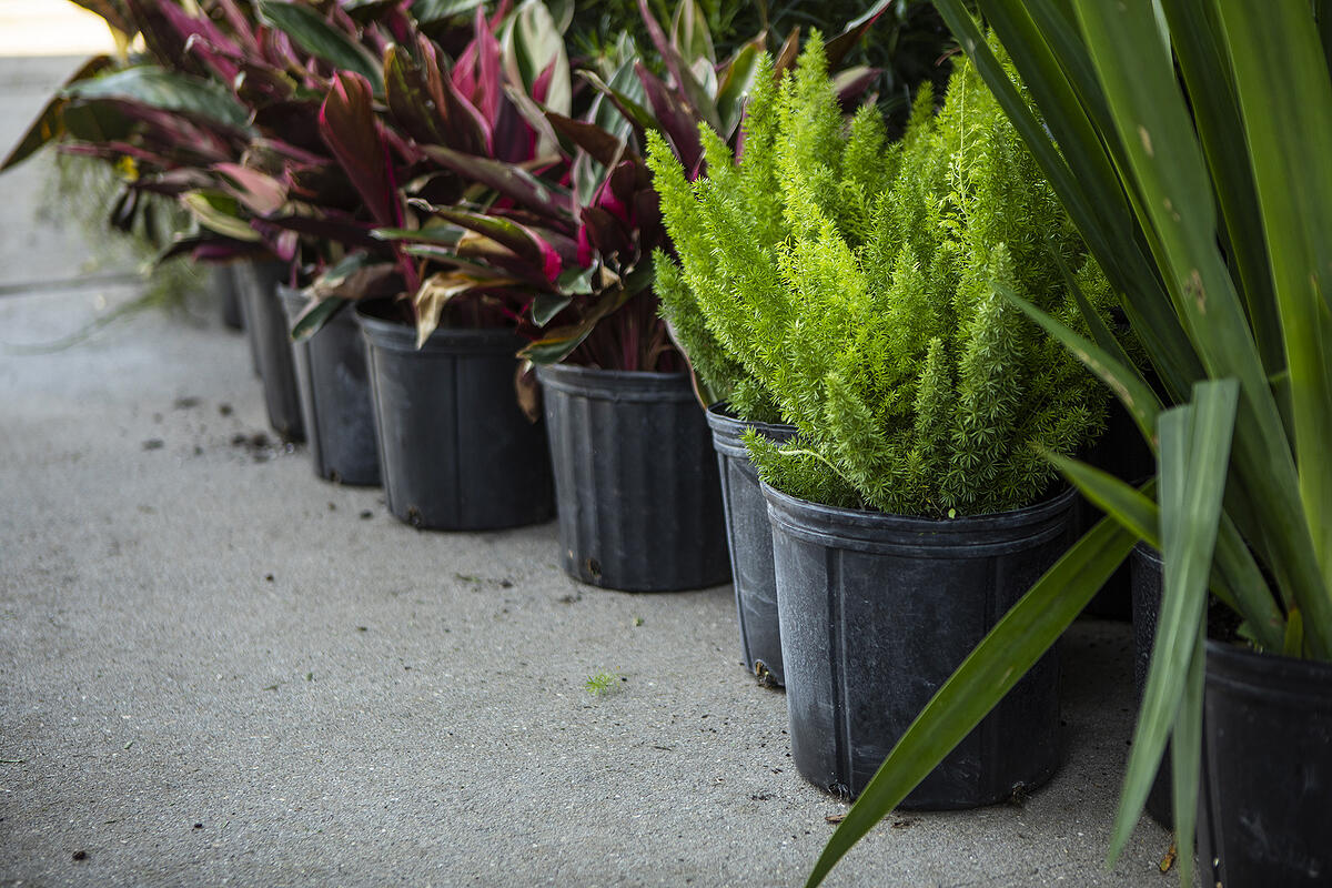 plantings for landscape installation in Orlando fl