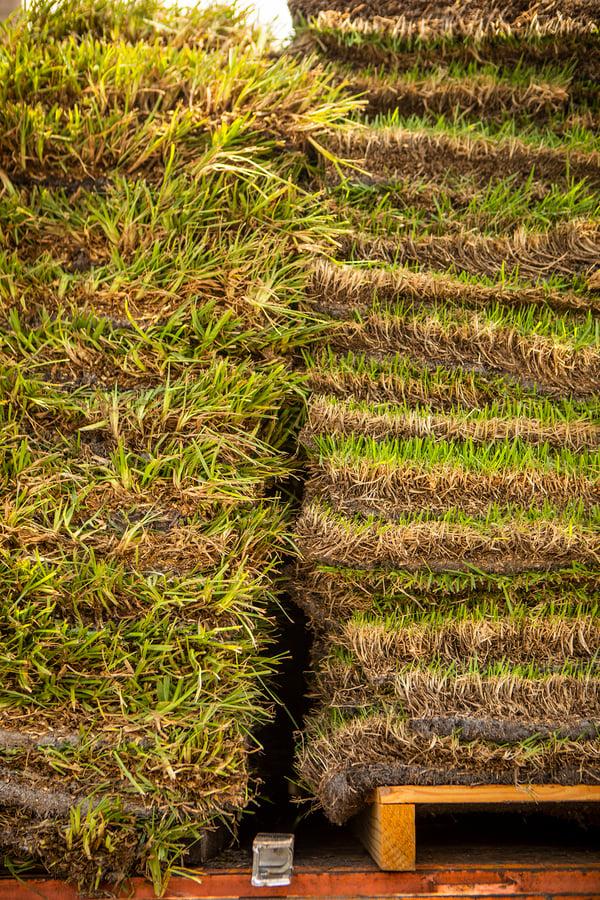pallets of sod