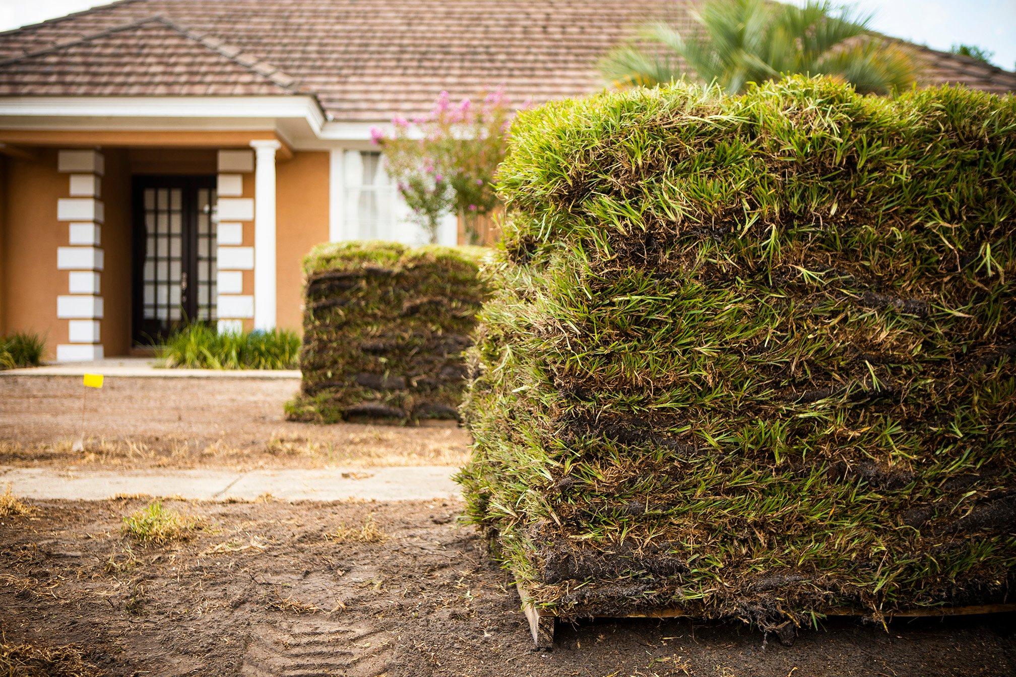 sod dead lawn 6