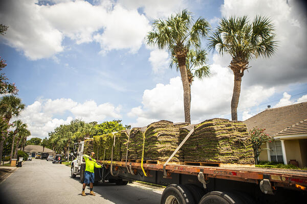 Sod being delivered by a truck