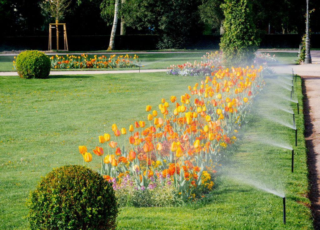 landscape irrigation system spraying plants