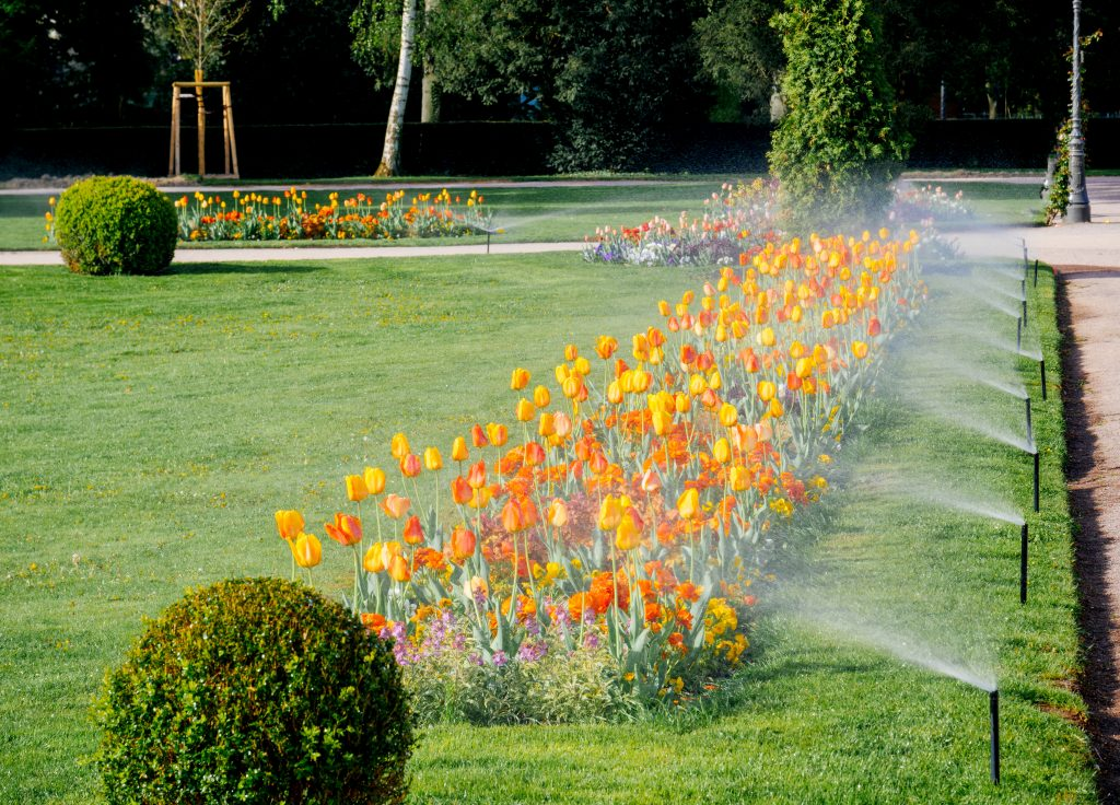 irrigation system waters tulips at commercial property