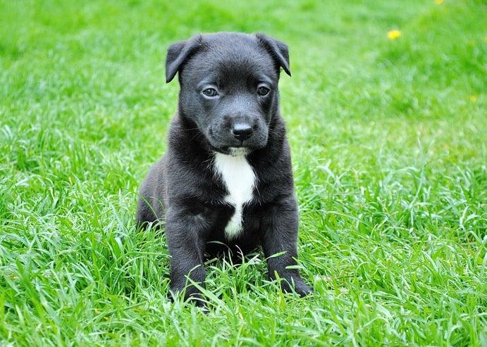 dog-in-lawn